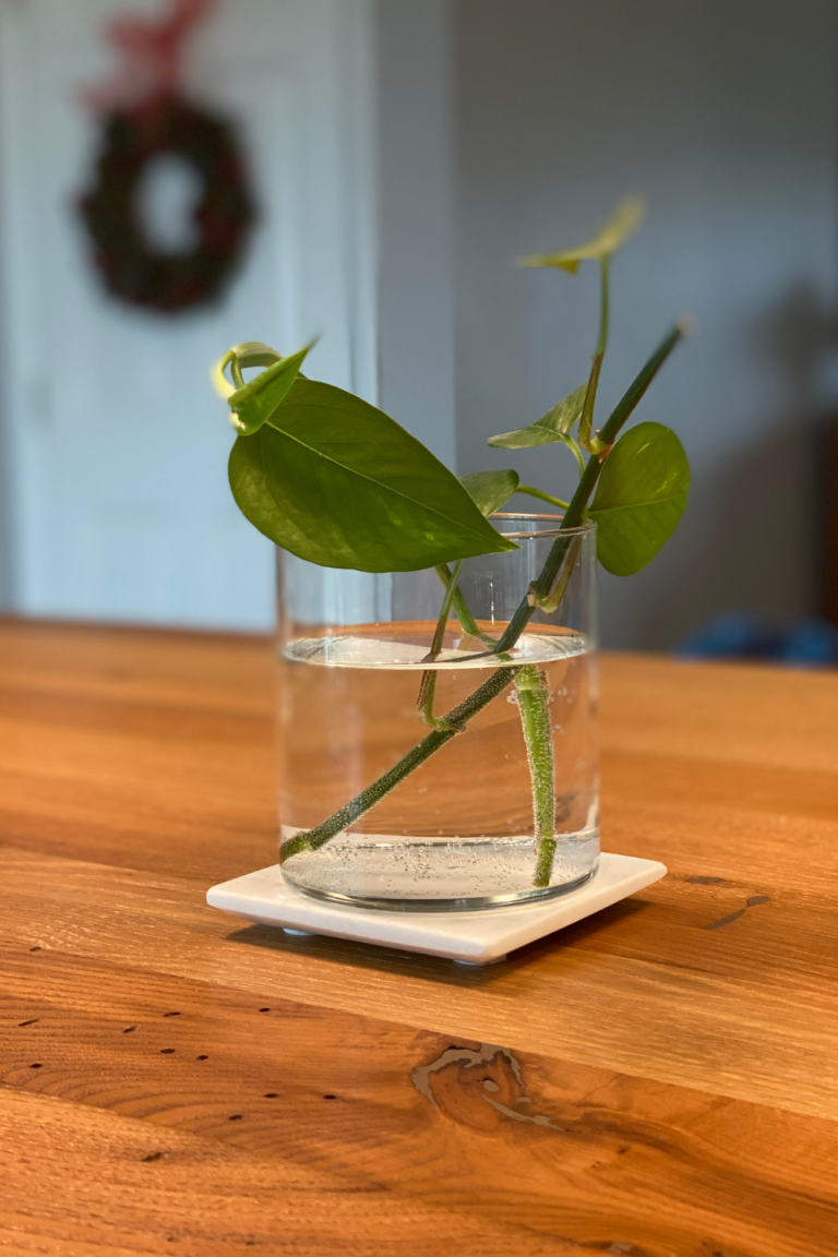 How to Propagate Plants in Water with Kids
